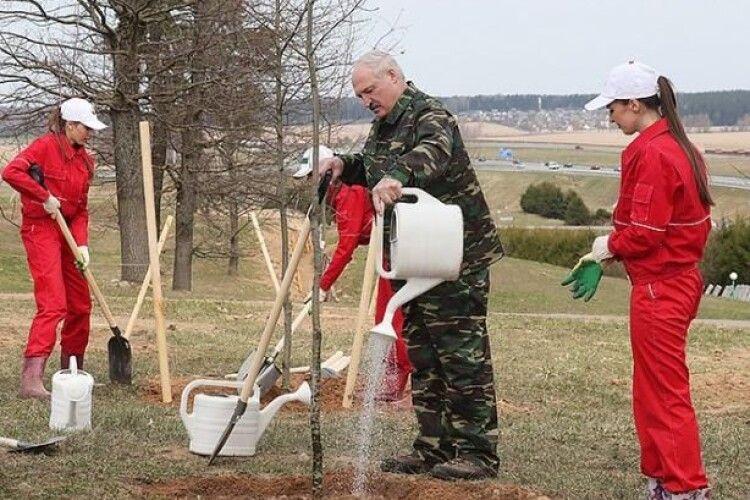 Суботник в Білорусі: Лукашенко висадив сосни в Чорнобильській зоні