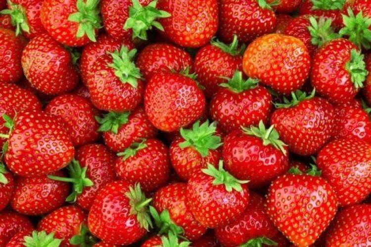 Закарпаці вже почали збирати полуницю з відкритого ґрунту