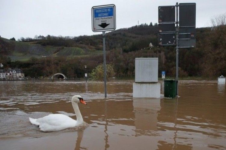 Затопленими вулицями німецьких міст плавають лебеді