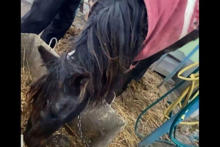 На Рівненщині через сімейні чвари страждає кобила: у справу втрутилися зоозахисники