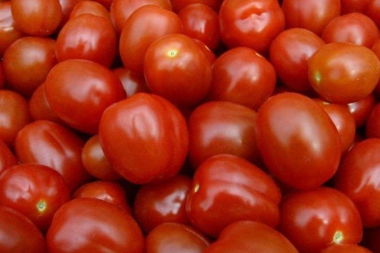В Україну намагались ввезти заражені помідори