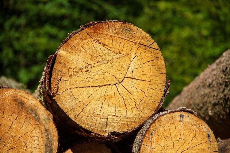 Група крадіїв з Рівненщини незаконно різали дерева і збували на Волині