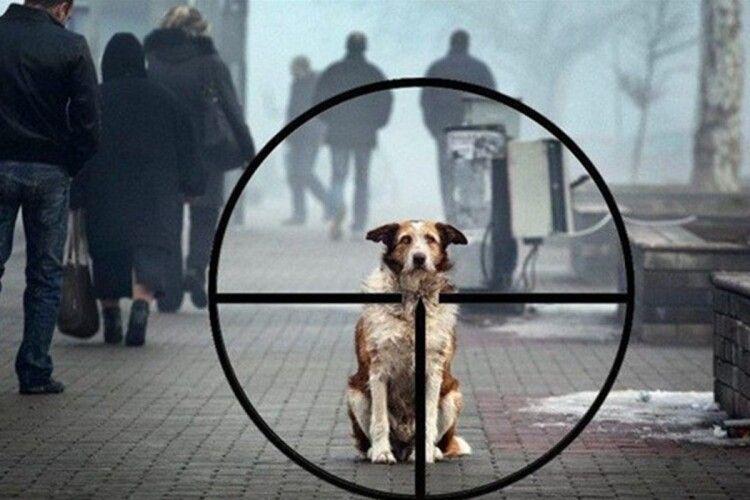 В обласному центрі продовжують труїти безпритульних собак