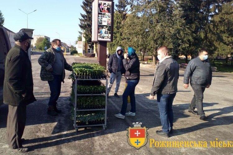 Сезонний ярмарок з продажу саджанців стартував у Рожищі