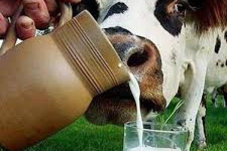 У Волинській ОДА назвали село, в якому корови дають молоко із найвищим вмістом цезію-137