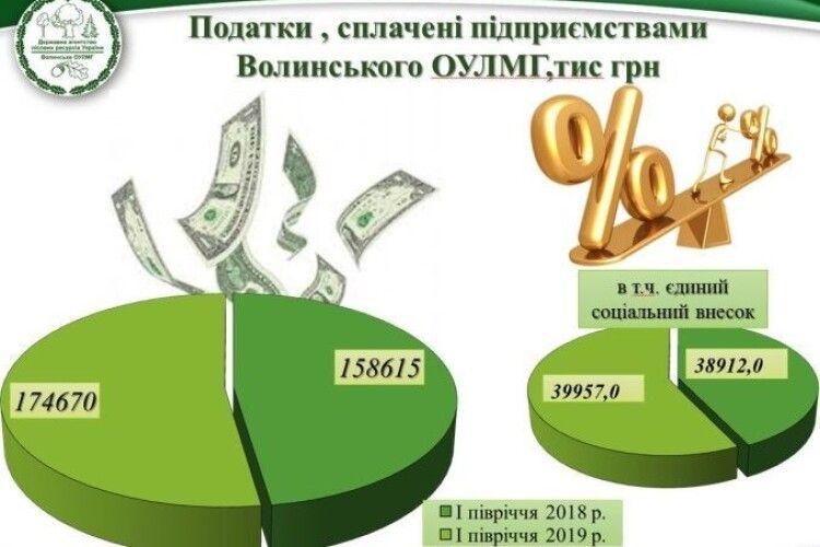 Волинські лісівники за півроку сплатили майже 175 мільйонів податків