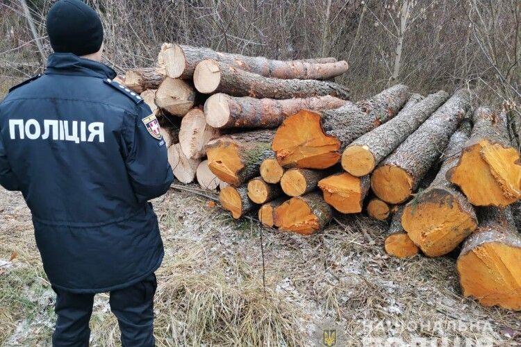 Волинська поліція стверджує, що в Нацпарку «Цуманська пуща» ударними темпами велася незаконна лісозаготівля (Відео)