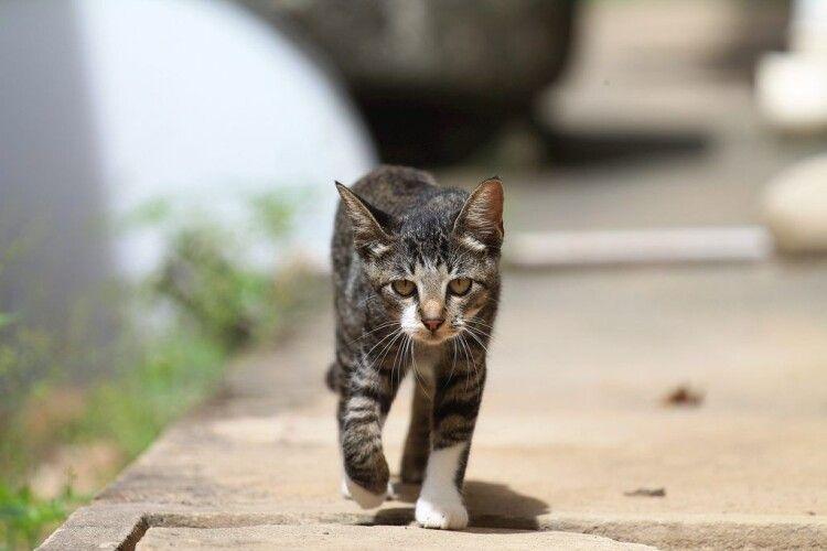 Луцькрада визнала безпритульних котів частиною екосистеми міста