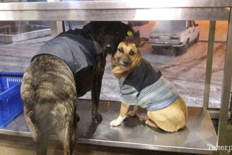У Кременчуці безпритульних собак одягли у светри
