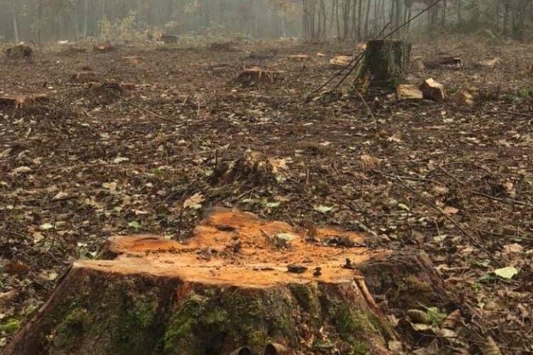 У нацпарку на Волині зрізали 640 дерев