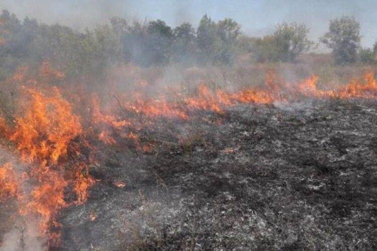 Внаслідок підпалу сухої трави вщент згоріли три автобуси