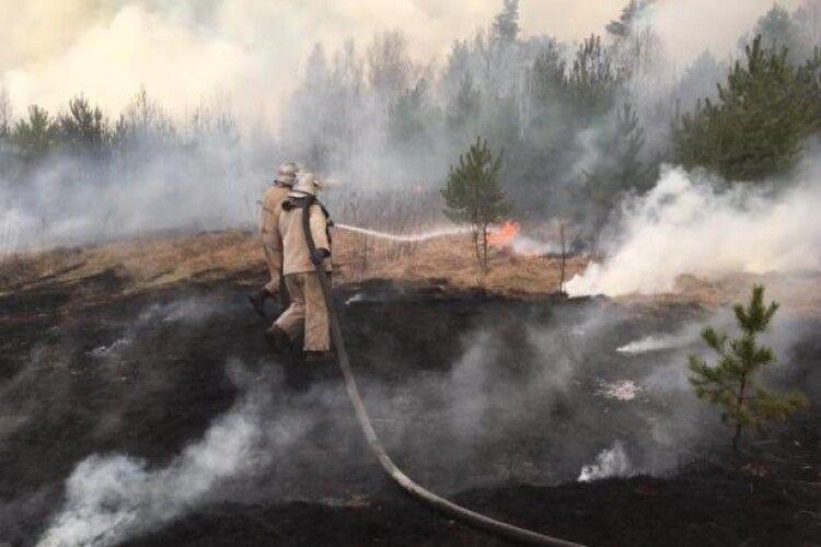 У Житомирській області, де другий тиждень горять ліси, спіймали двох паліїв