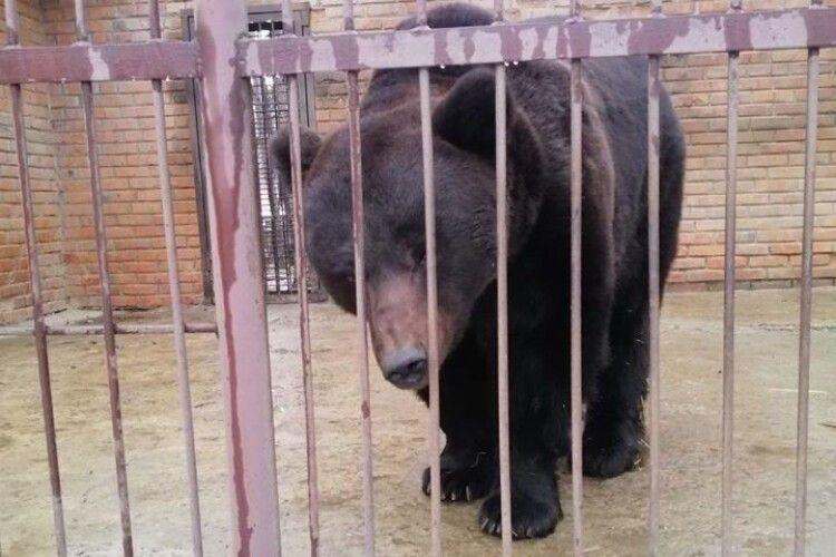 Приватний зоопарк організували на території бази відпочинку