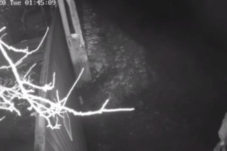 Під луцьку «Ласку» невідомі на авто вночі підкинули цуценят в мішку (Відео)
