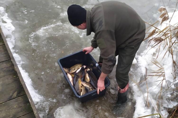 До Кричевичівського водосховища вселили понад 2 тонни цінних видів риб (Фото)