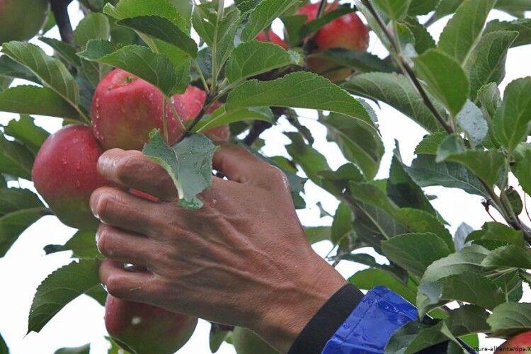 У Польщі поліцейська врятували життя українцю, який пішов по яблука, і ледве не загинув