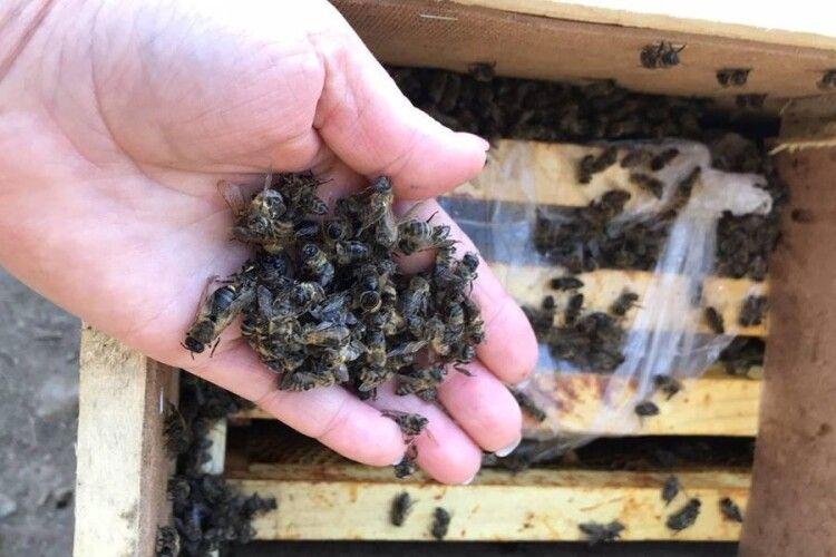 Загинули 8 млн бджіл, яких відправили Укрпоштою