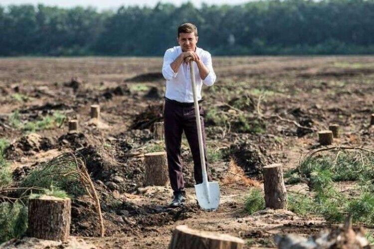 Мільярд дерев. Держлісагентство визнало, що не подужає план Зеленського