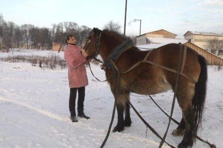 Сніг на території лікарні прибирають кінним снігочистом (Відео)
