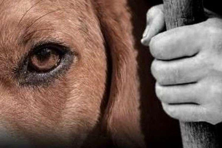 На Рівненщині чоловіка заарештували за вбивство собаки