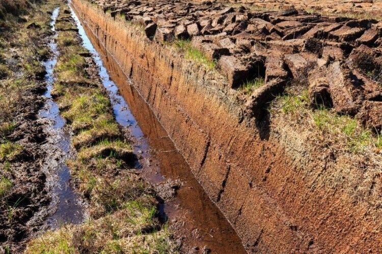 Голові Волинської ОДА не дозволили вивести з лісового фонду 40 гектарів торфовищ