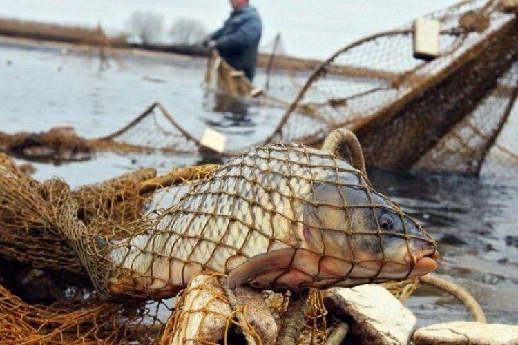 Волинянини незаконно наловили більш як 24 кілограмів риби