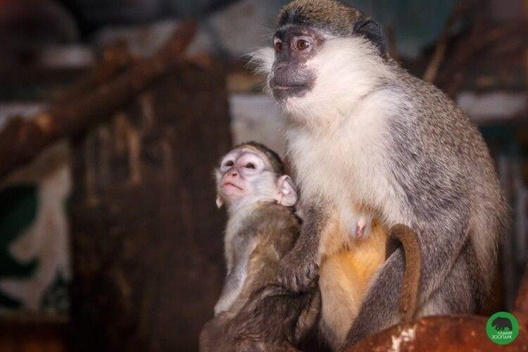 Мешканці луцького зоопарку матимуть нові домівки
