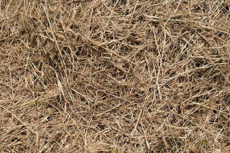 Біля копиці соломи на Рівненщині знайшли мертву селянку