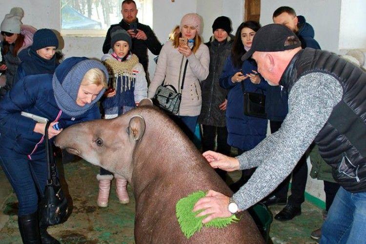 Рівненській тапірці спинку тре особисто директор зоопарку (фото)