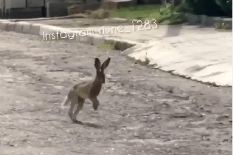 По Рівному бігав вухань (Відео)