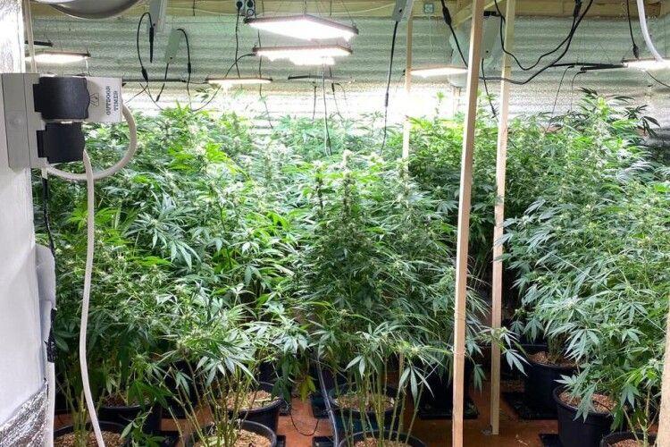 На Волині викрили ділків, які вирощували і збували наркоту (Фото)