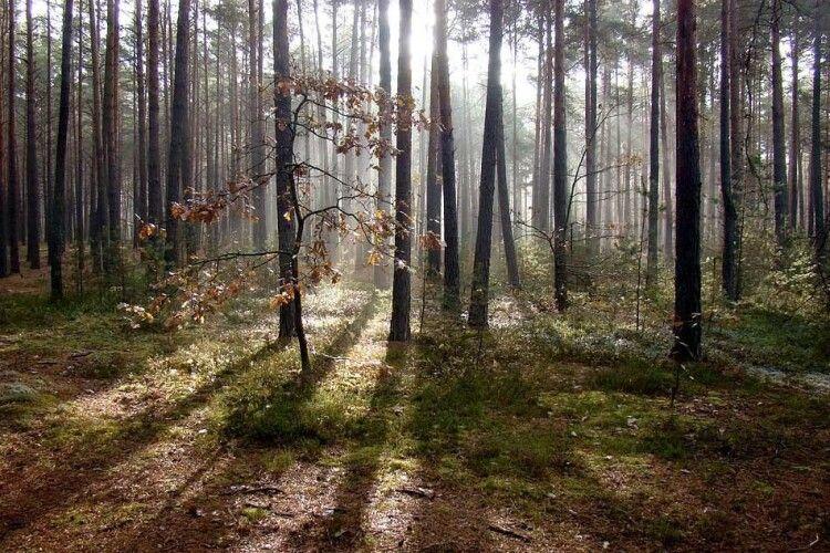 У лісі на Волині знайшли повішеним чоловіка, якого шукали родичі