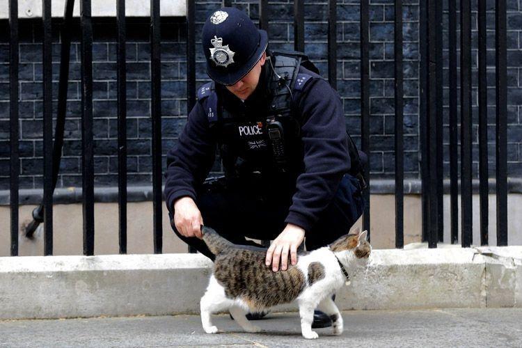 У Британії котів беруть на роботу на пошту і навіть у поліцію