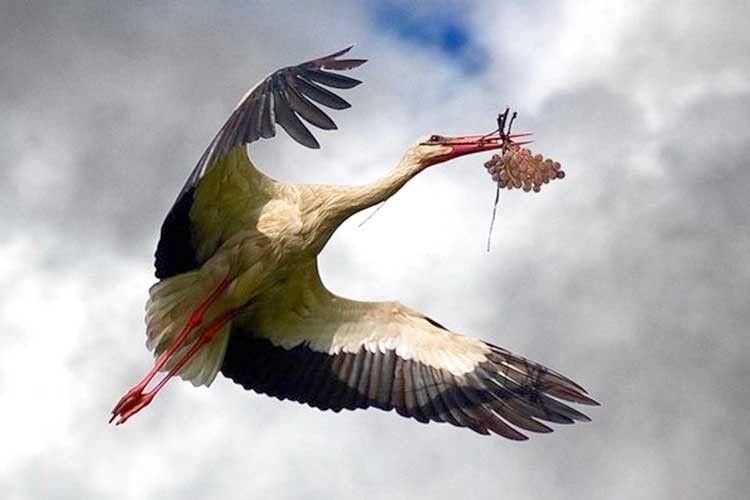 «Птаха ця над хатою кружля— там народиться прегарне немовля»