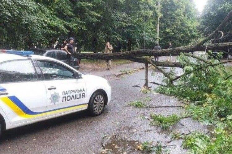 У Луцьку дерево впало на автомобіль (Фото)