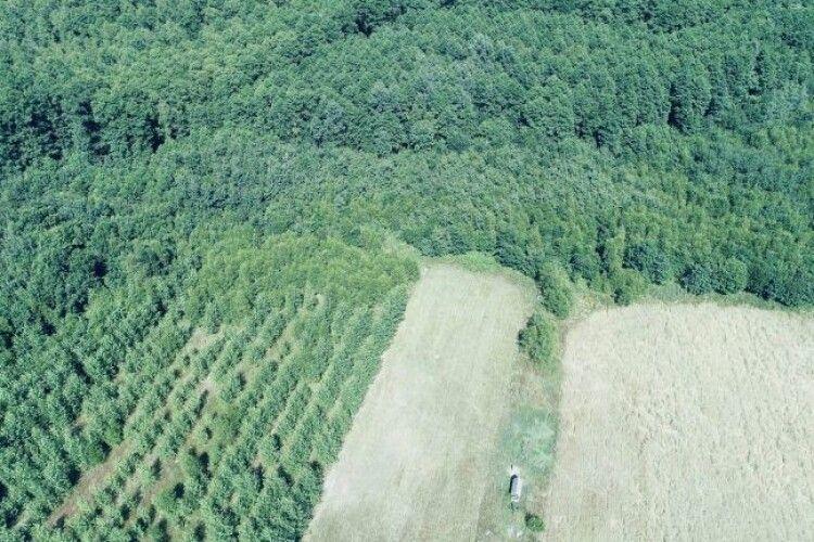 У держлісгоспах Волині створили понад 200 га кормових полів