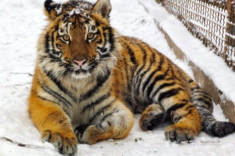 Показали спантеличених снігом мешканців Рівненського зоопарку (Фото)