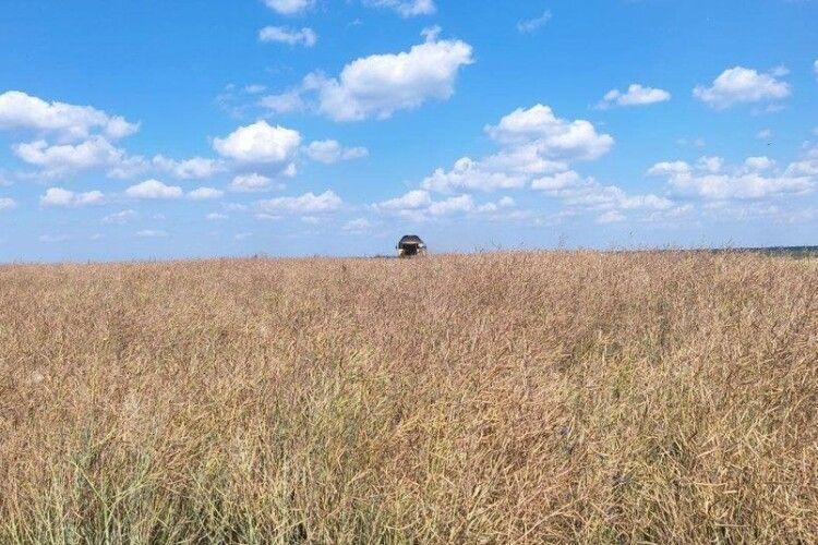 На Волині за місяць продали 255 гектарів паїв