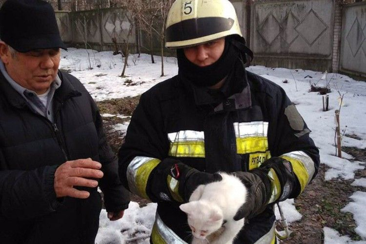 П'ятеро пожежників та дві одиниці спецтехніки рятували кота-верхолаза, який видерся на 12-метрову висоту (фото, відео)
