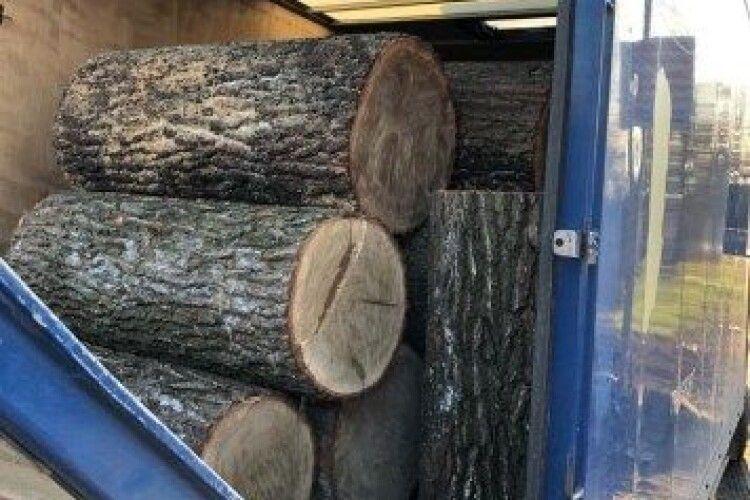 Крадений дуб не доїхав до нелегального переробника
