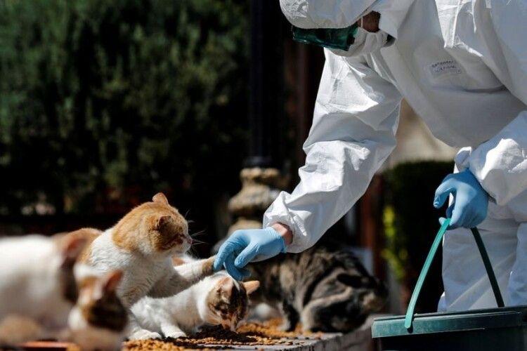 Двоє котів захворіли на COVID-19