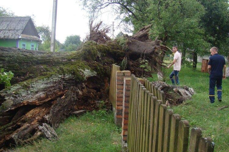 Повалені дерева і пошкоджений будинок: у селах на Волині негода наробила лиха (Фото)