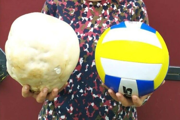 Волинянка вполювала гриба розміром з волейбольний м'яч
