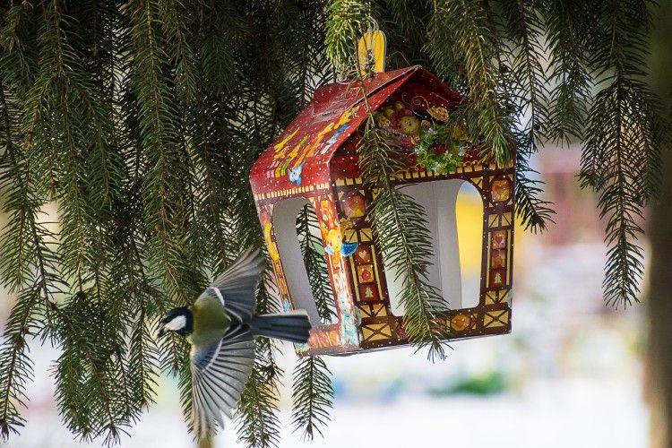 ВІКНО РУБРИКИ: краса пташки — в польоті, а людини – у щедрості