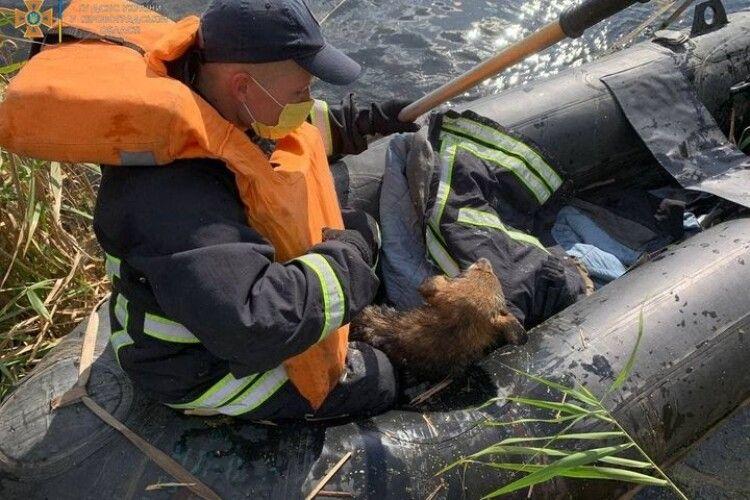 Бійці ДСНС врятували пса, який цуценям прогулював уроки плавання у собачій школі