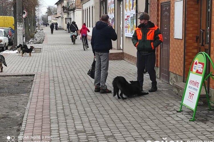 У місті на Волині на людей напали і покусали собаки