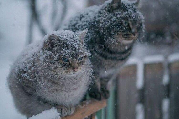 Погода на понеділок, 3 лютого: невеликий дощ, місцями з мокрим снігом