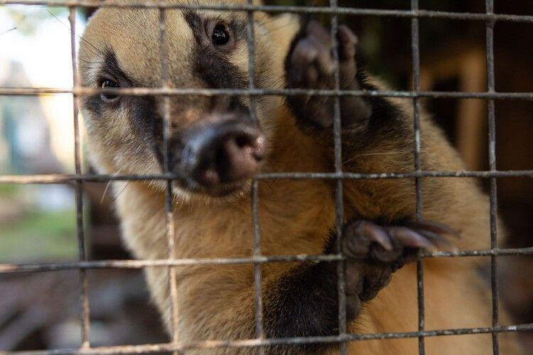 У Луцькому зоопарку розповіли про хамів-відвідувачів