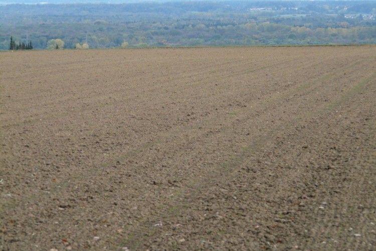 Вартість землі на Рівненщині на січневих аукціонах зросла вдвічі