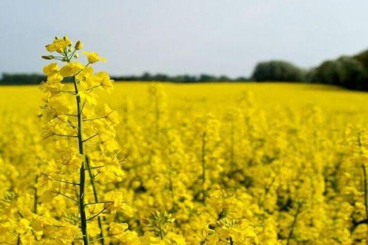 Мешканців Княгининівської громади закликали від сьогодні не випускати бджіл
